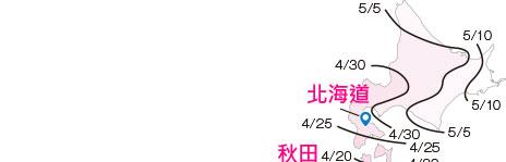 KW 桜カレンダー