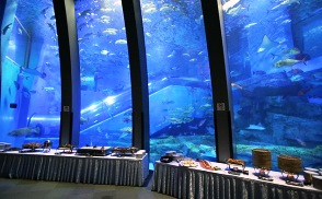 Party in an aquarium