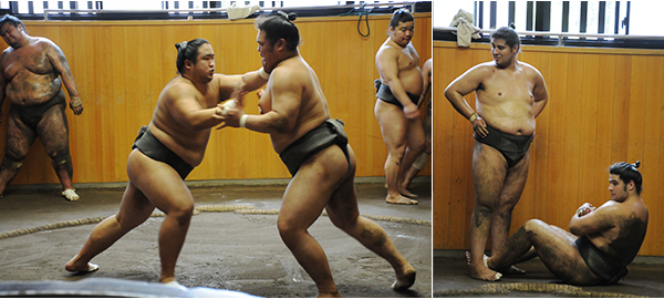 Visit to a Sumo Stable