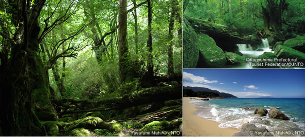 All of Japan's Natural Bounty
