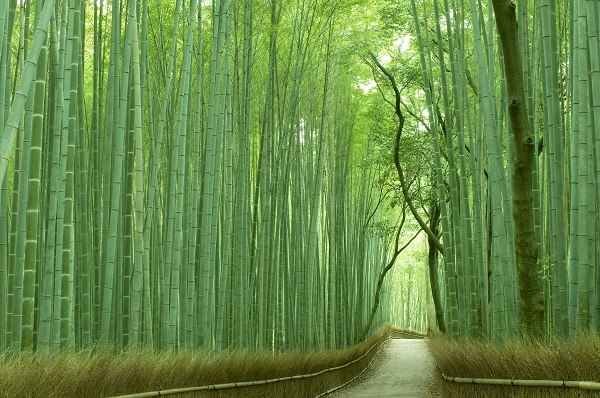 [Virtual Tour] Kyoto Arashiyama & Sagano Tour led by Local Expert with National Guiding License (1st Session, From 11:00 JST)